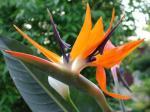 fiore_tropicale